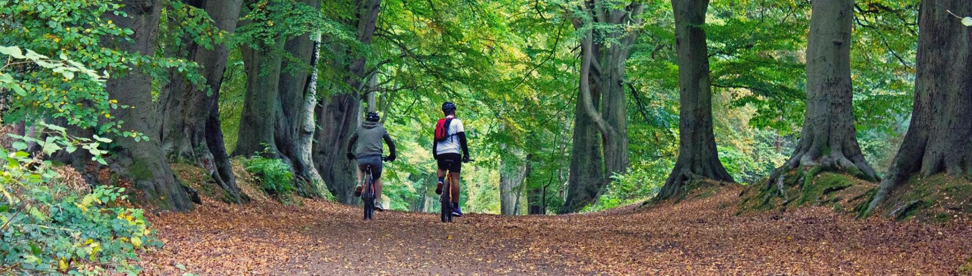 Cycling in Northamptonshire Forest (Harlestone Firs)